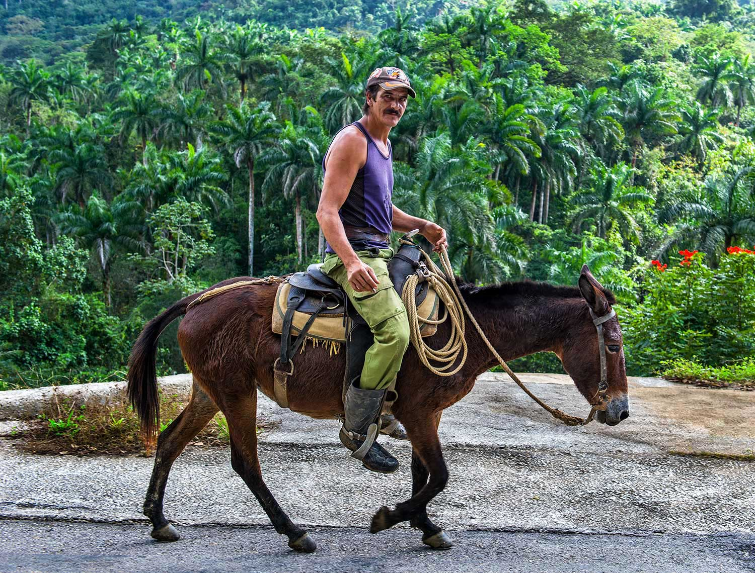 Cuban horseman, Topes de Collantes nature preserve