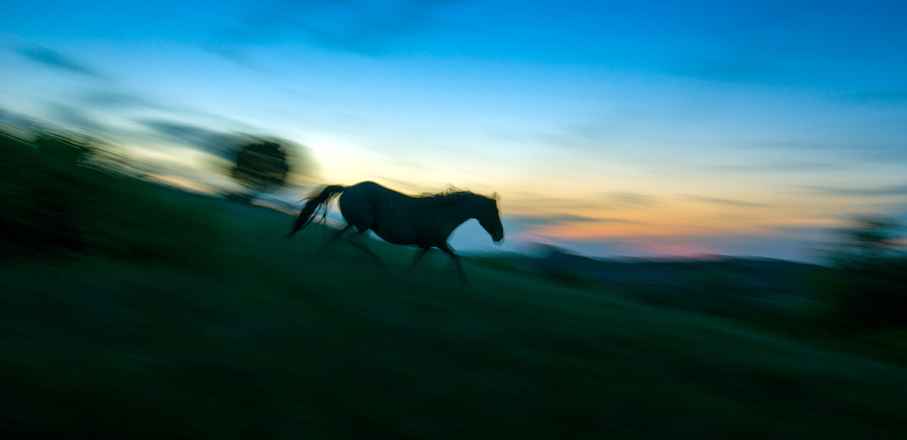 A photo of a wild horse in Theodore Roosevelt National Park taken by Fargo Photographer Dan Koeck