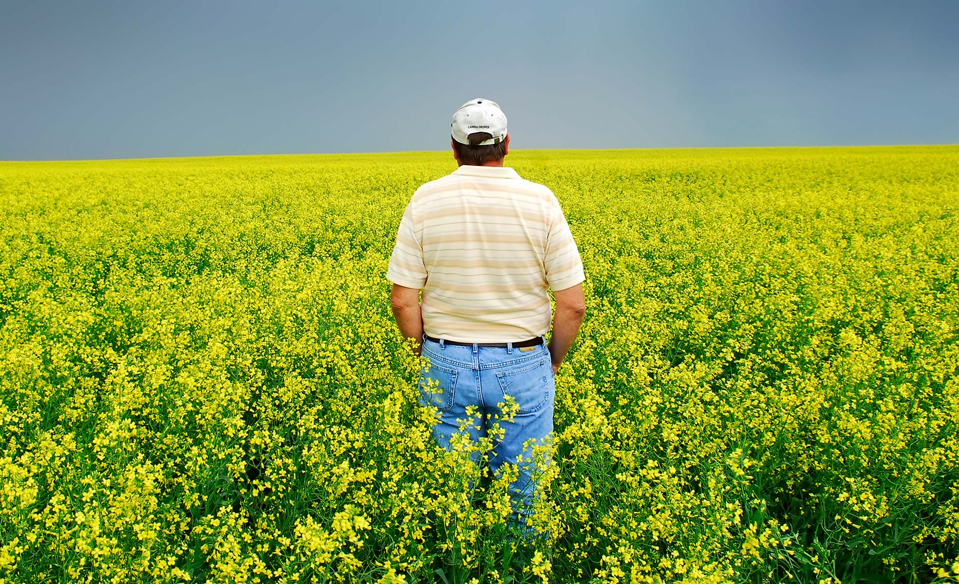 A photo of a North Dakota canola farmer taken by North Dakota commercial photographer Dan Koeck.