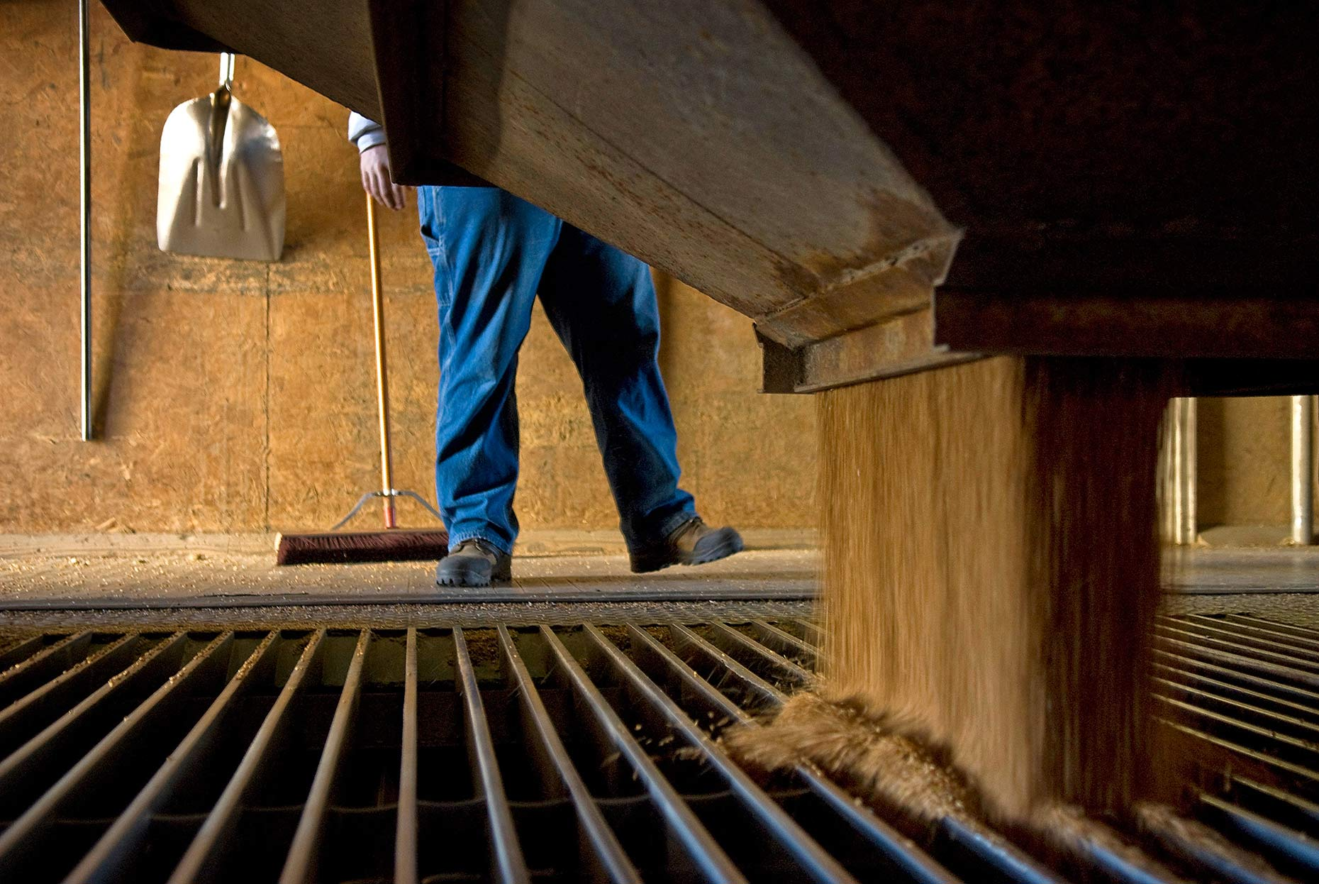 A photo of a farmer in a grain elevator by Fargo, North Dakota photojournalist Dan Koeck